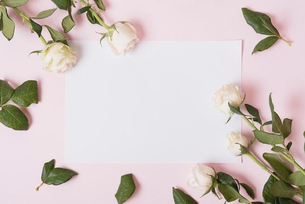 Rosas hermosas blancas en el papel en blanco blanco contra fondo rosado
