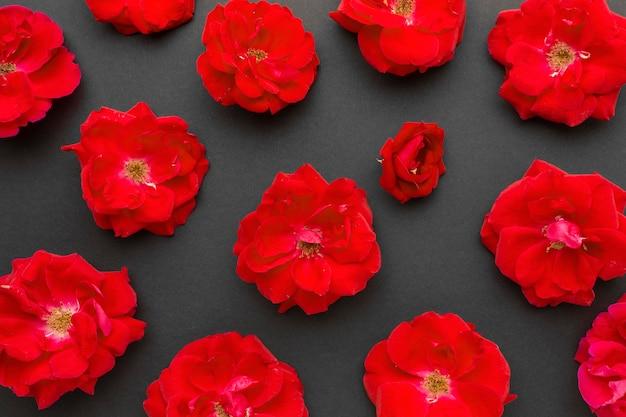 Rosas de iceberg rojas planas