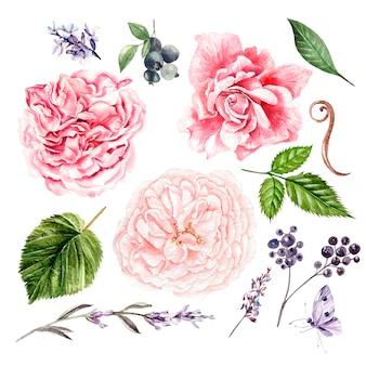 Rosas, lavanda y hojas, acuarela, se pueden utilizar para tarjetas de felicitación, tarjetas de invitación para bodas, cumpleaños y otros antecedentes de vacaciones y verano. ilustración