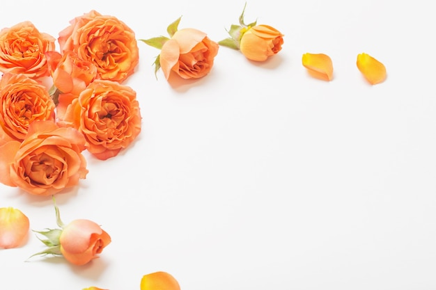 Rosas naranjas sobre fondo blanco.