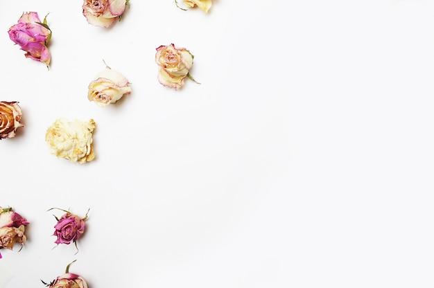 Rosas patrón sobre el fondo blanco, vista superior, endecha plana