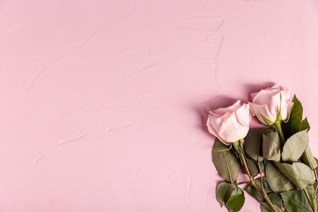 Rosas preciosas con espacio de copia