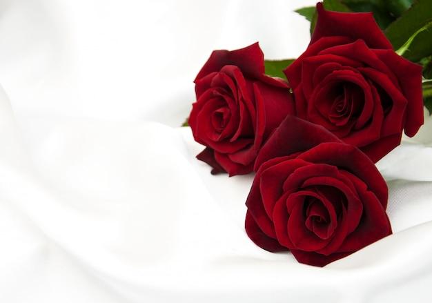 Rosas rojas frescas