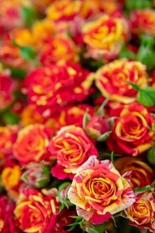 Rosas rojas y naranjas.