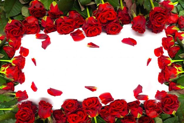 Rosas rojas sobre un fondo blanco. marco de flores