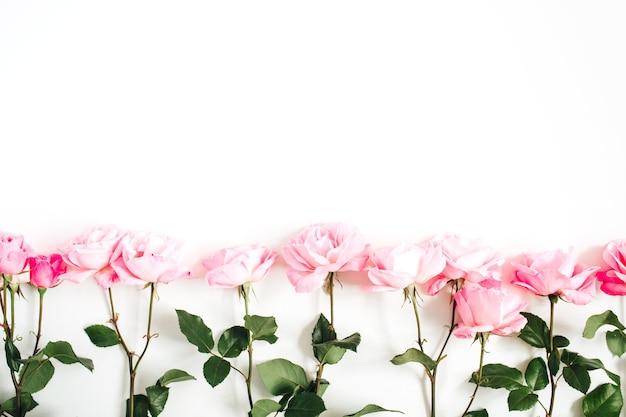 Rosas rosadas, blanco