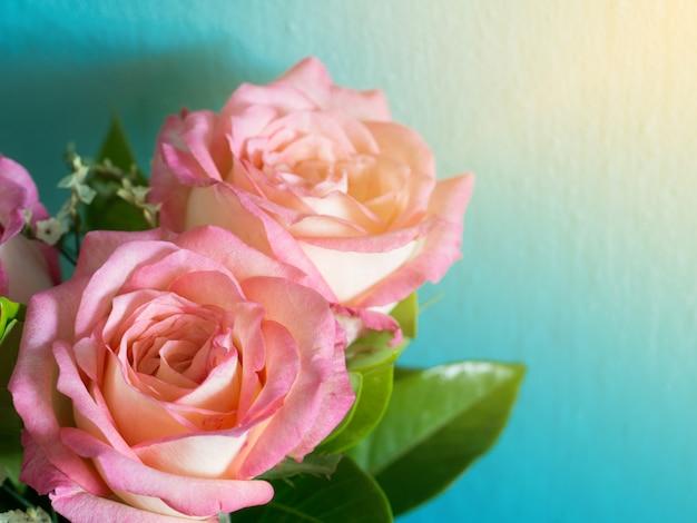 Rosas rosadas en el fondo azul y sol de la mañana
