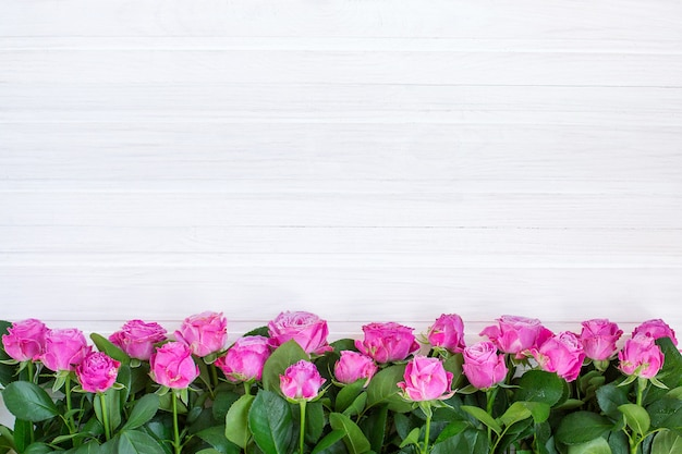Rosas rosadas sobre un fondo blanco