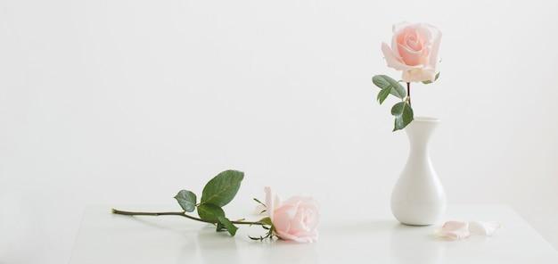 Rosas rosas en jarrón blanco sobre superficie blanca