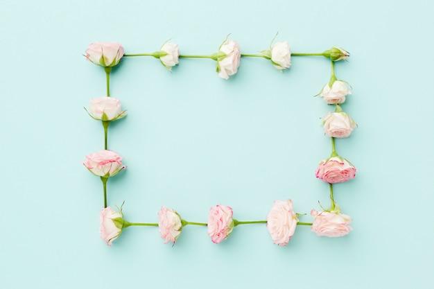 Rosas rosas marco plano yacía sobre fondo azul.