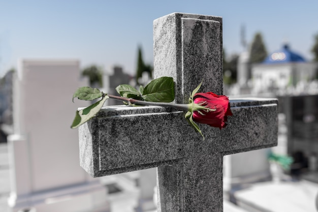 Rose en un cementerio con lápida