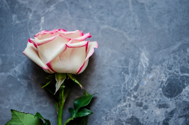 Rose sobre fondo de mármol oscuro con lugar para el texto. lay flat.
