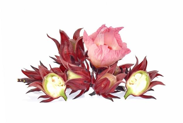 Roselle hibiscus sobre fondo blanco.