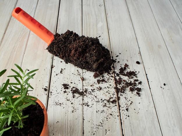 Rosemary se planta en macetas con equipo de jardinería en una mesa de madera blanca.