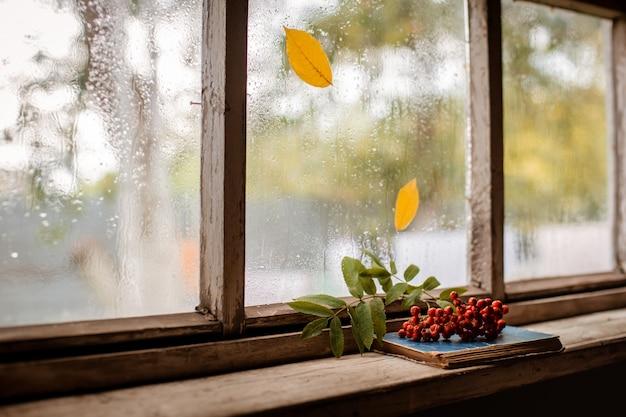 Rowan rama en la ventana mojada de madera del pueblo, espacio de copia.