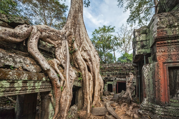 Ruinas antiguas y raíces de los árboles, templo de ta prohm, angkor, camboya