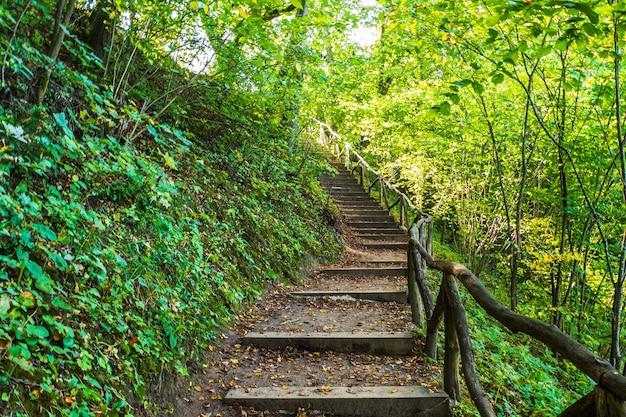Ruta de senderismo del bosque profundo. subir escaleras de madera en un sendero arbolado en el bosque.