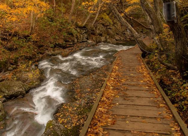 Ruta de senderismo cerca de un río en otoño