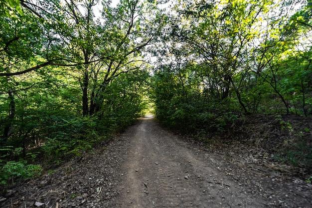 Ruta de senderismo en kus tba en tbilisi