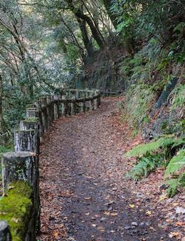 Ruta de senderismo en el parque nacional de minoo o minoh en otoño, osaka, japón