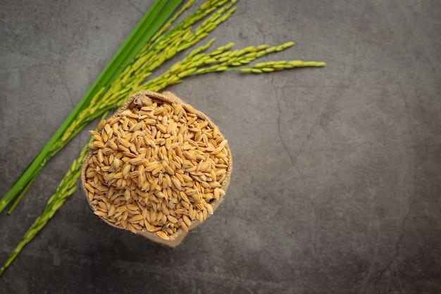 Un saco de semillas de arroz con planta de arroz