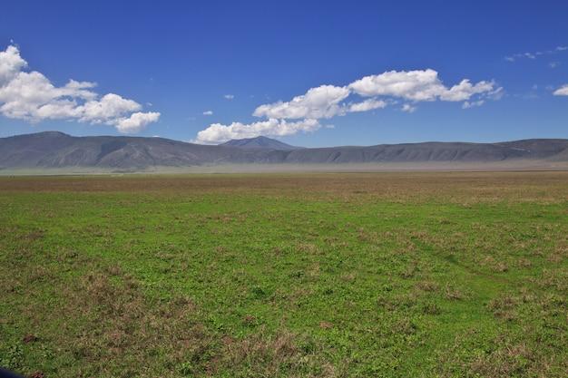 Safari en kenia y tanzania, áfrica