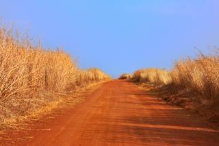 Safari pista