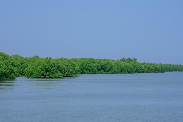 Sai met raek, bosque de manglar.
