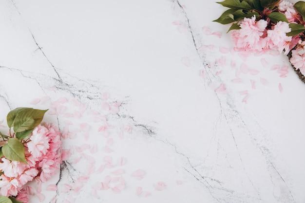 Sakura flores y pétalos sobre fondo de mármol