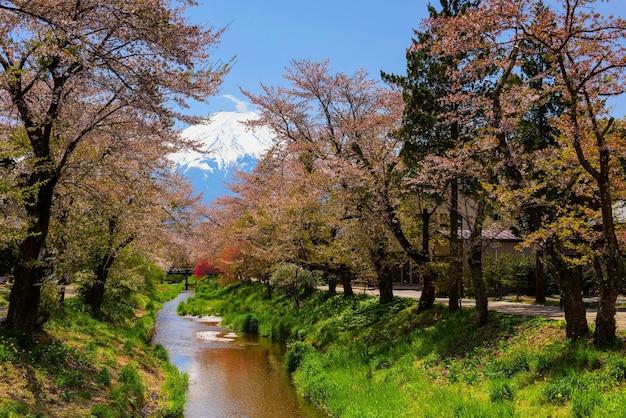 Sakura o flor de cerezo alrededor del canal en el pueblo de oshino hakkai con el monte. fuji