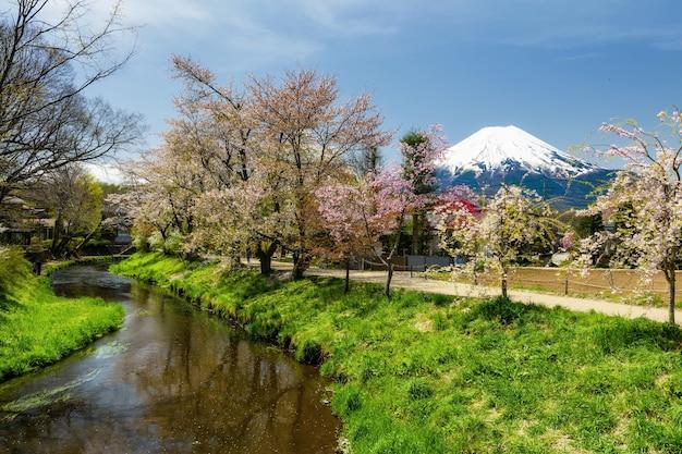 Sakura en oshino hakkai con el monte fuji