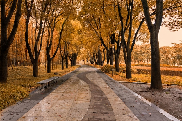 Salida del sol en el bosque de otoño