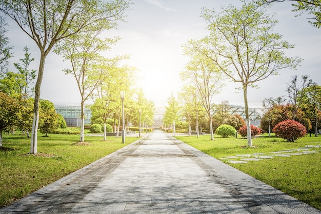 Salida del sol en el hermoso parque