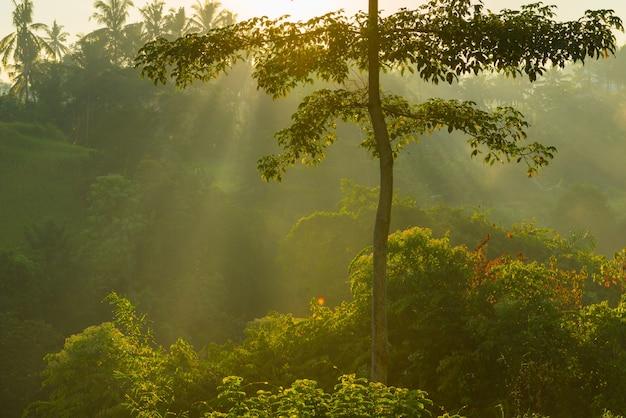 Salida del sol sobre la selva de bali