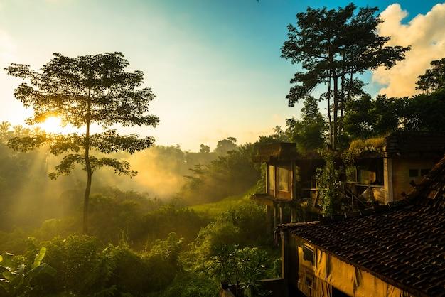 Salida del sol sobre la selva