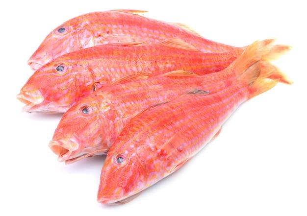 Salmonete de pescado