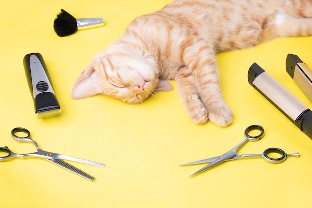 Salón de moda para gatos