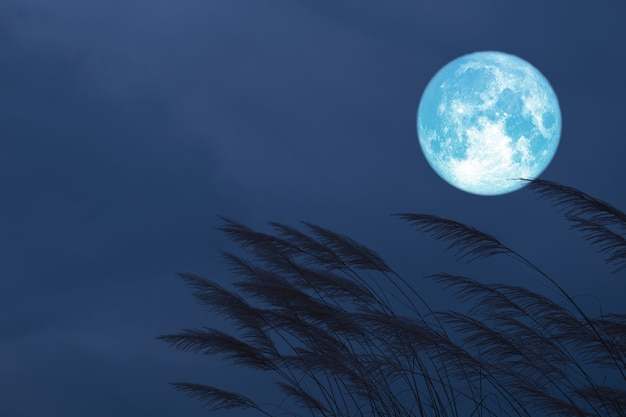 Sangre fresa luna en el cielo nocturno espalda silueta hierba flores