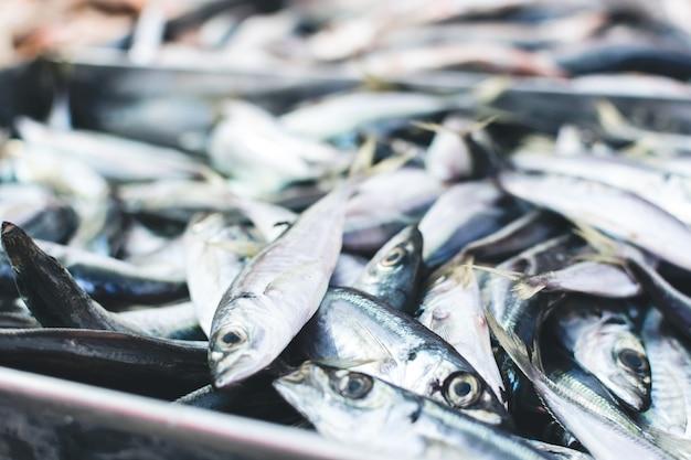 Sardinas en el mercado de pescado