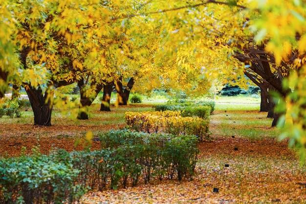 Sauce de árboles de otoño en el parque de la ciudad.