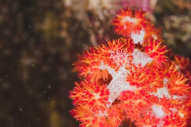 Seafan grande hermoso en subacuático