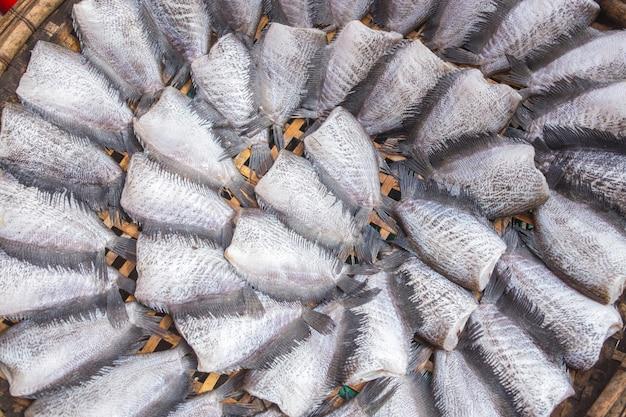 Secado trichogaster pectoralis peces dispuestos en filas mercado de tailandia