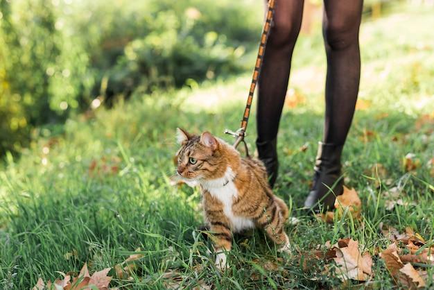 Sección baja de una mujer caminando con su gato.