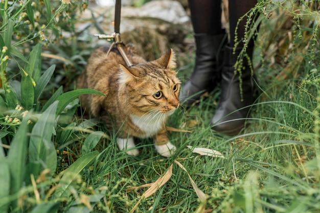 Sección baja de una mujer de pie en la hierba verde con su gato atigrado