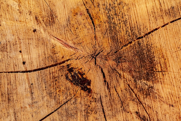 Sección de corte de madera de un árbol como fondo