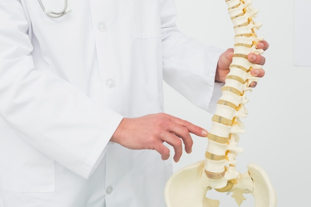 Sección media de un médico varón con esqueleto.
