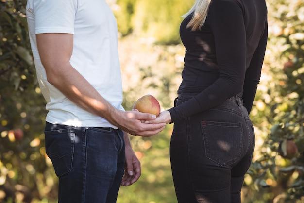 Sección media de pareja con manzana en huerto de manzanas