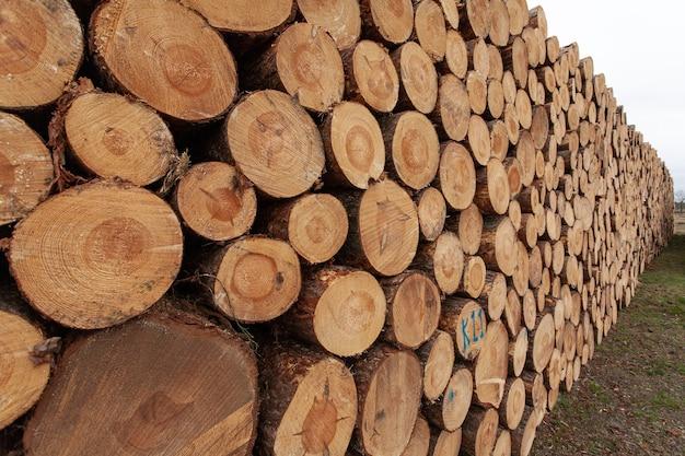 Selección de tocones de madera en el campo