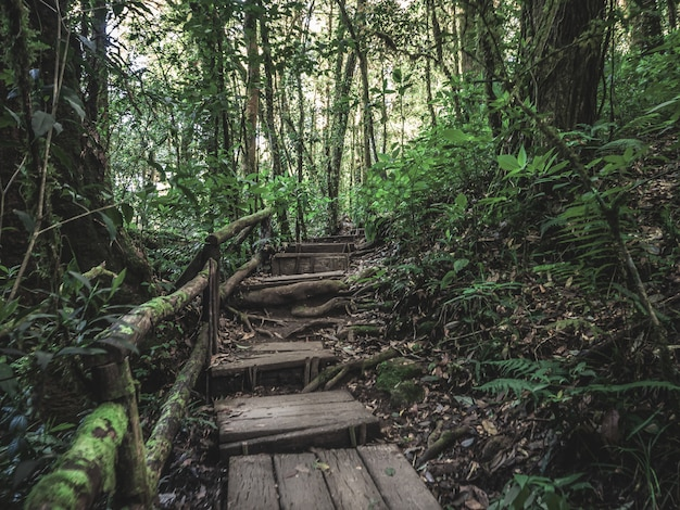 Selva tropical en el parque nacional doi inthanon, tailandia