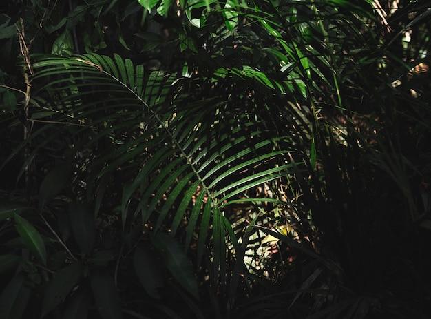 Selva verde del bosque con hojas de palma